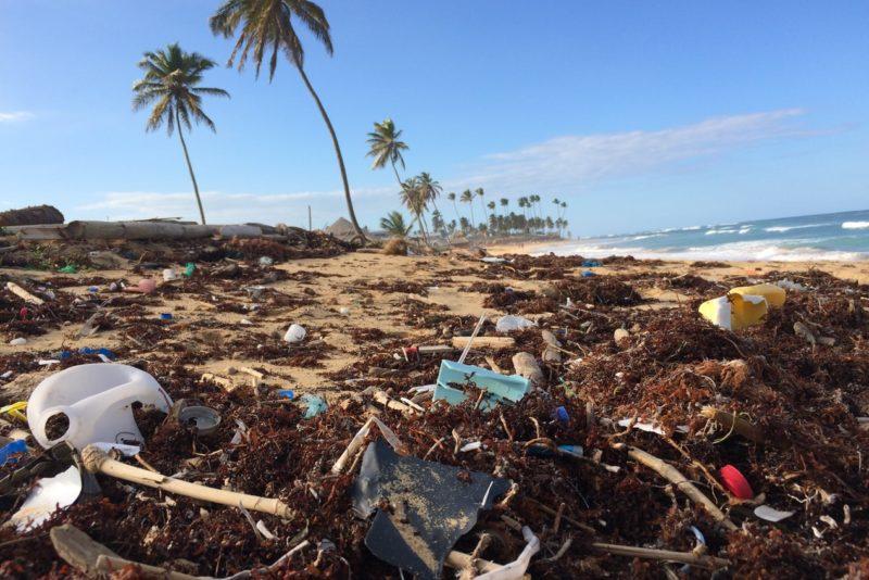 Coconut tree near seashore.